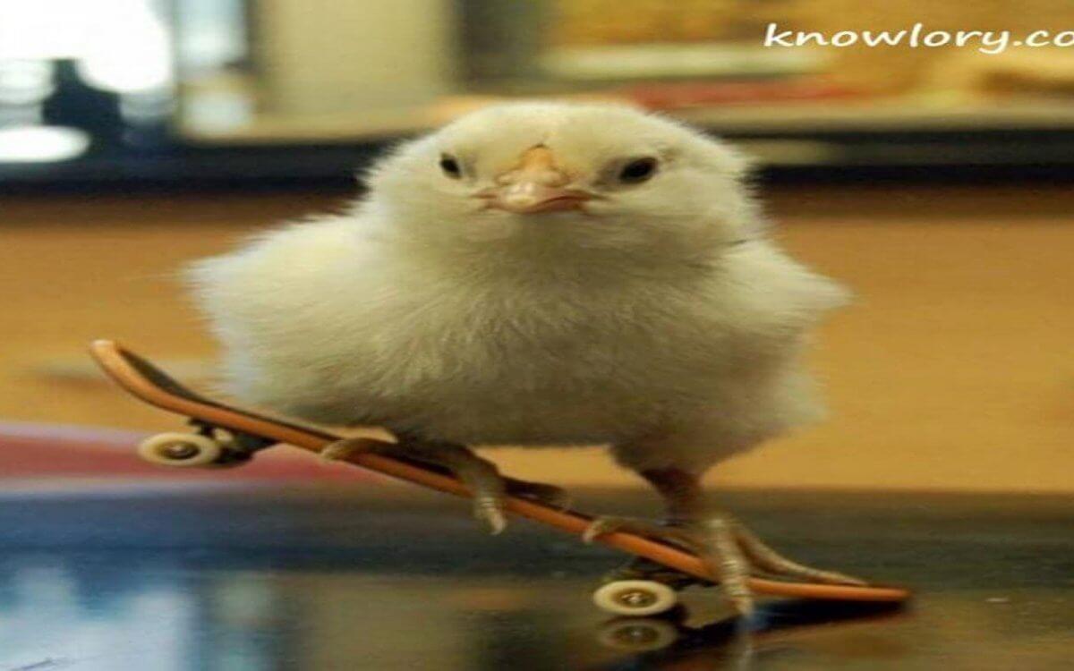Suguna Chicken Poultry Image