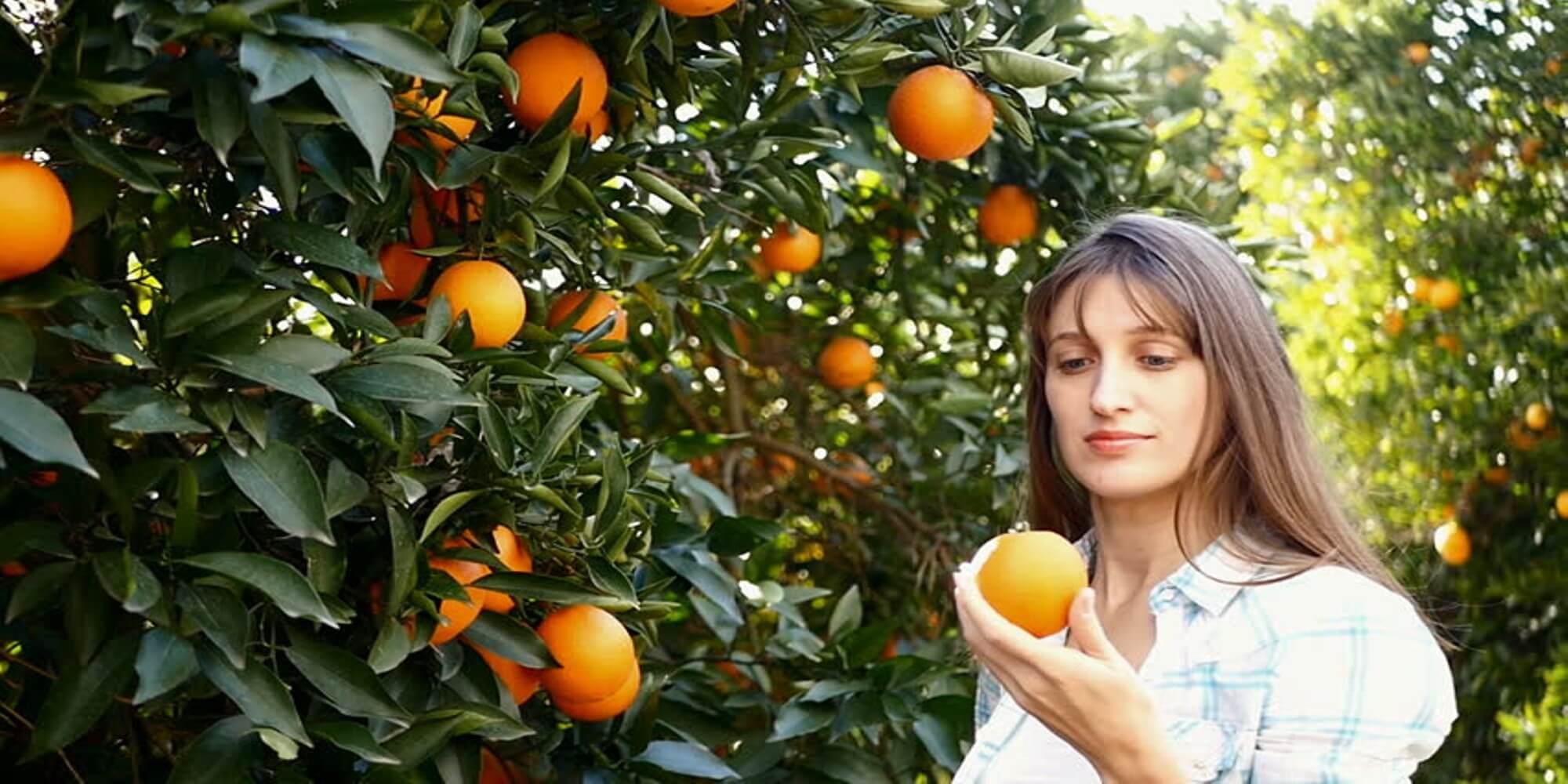 coorg orange image